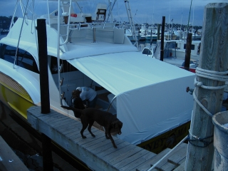 Boat Cover 14